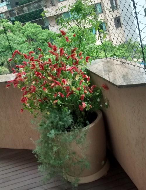 Jardim em vasos: que tipo de vaso ou floreira é melhor para plantar?