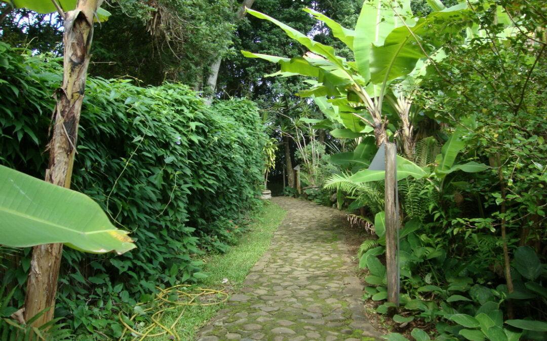 Praia do Rosa, em SC: plantas tropicais nas ruas e jardins