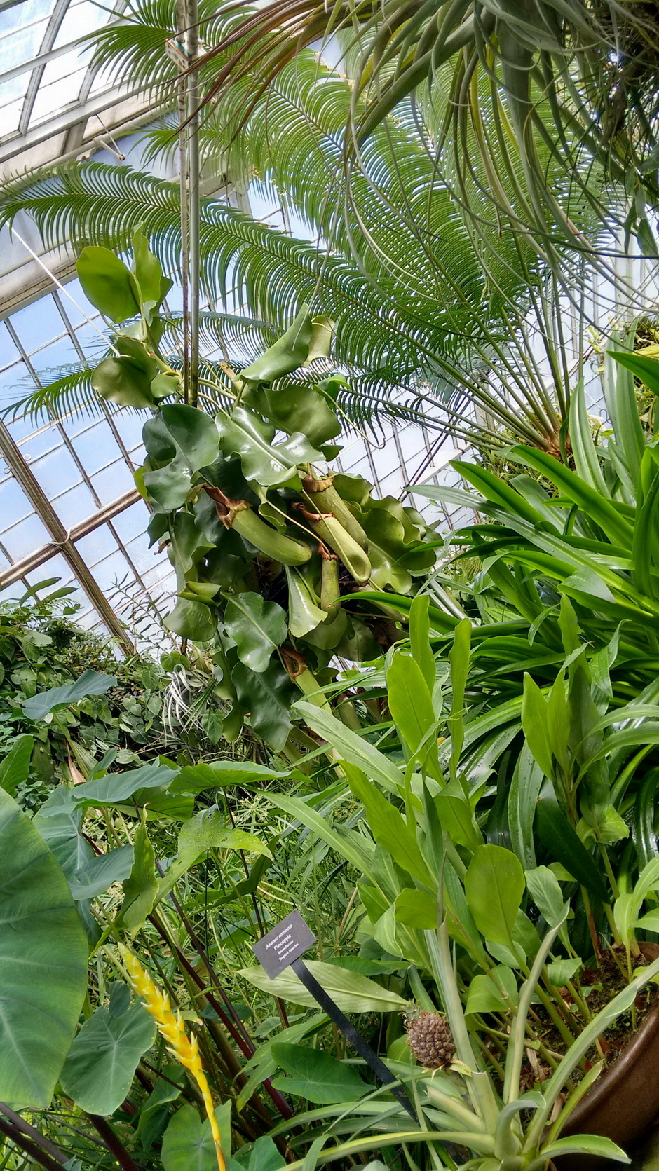 estufa espécies carnívoras, palmeiras e epífitas