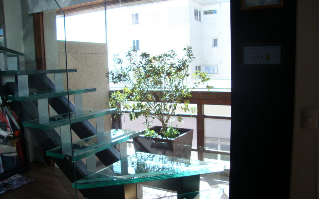 Saiba como plantar árvores frutíferas na sacada de apartamento