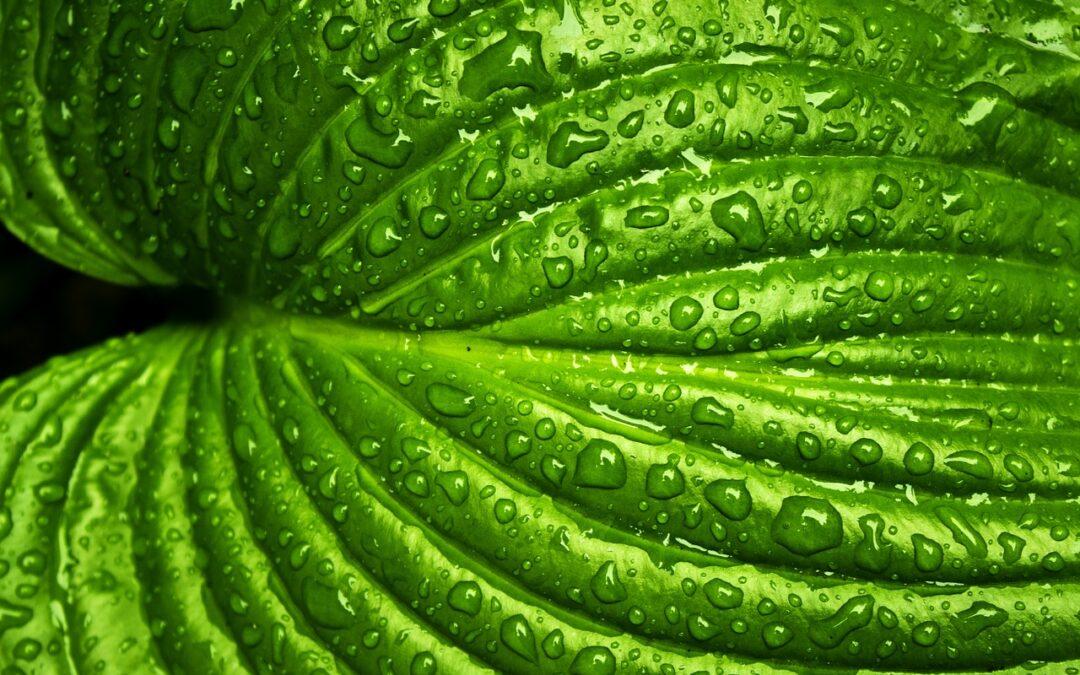 Saiba porque a falta e o excesso de água ocasionam problemas nas plantas