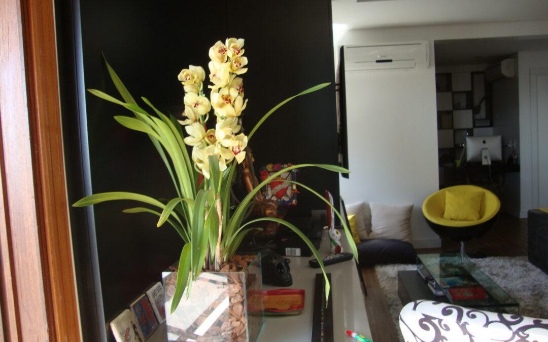 Veja vasos com plantas que decoram e humanizam os ambientes internos