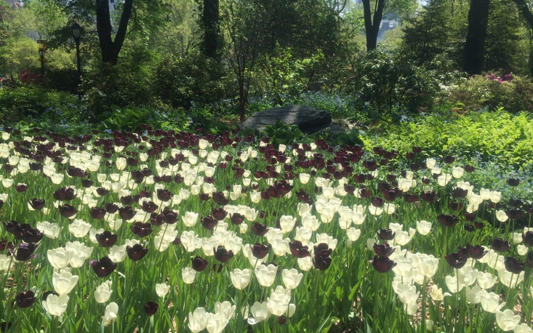 É primavera no Central Parque em Nova Iorque