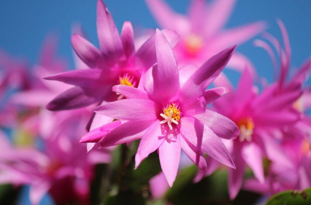 Sem tempo para cuidar das plantas? Suculentas são ótimas opções de plantas por serem simples de cultivar e resistentes