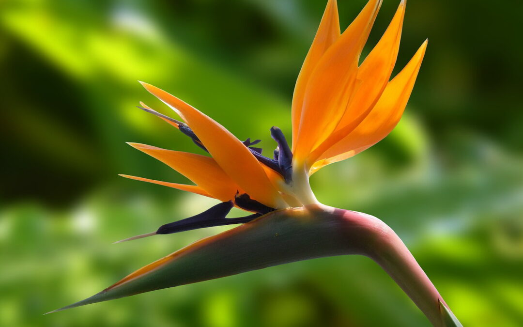 Dia dos namorados: surpreenda dando flores exóticas de presentes