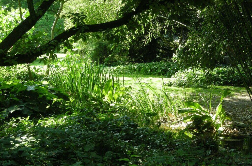 Bem estar: porque o contato com a natureza e com as plantas é tão relaxante e revigorante?