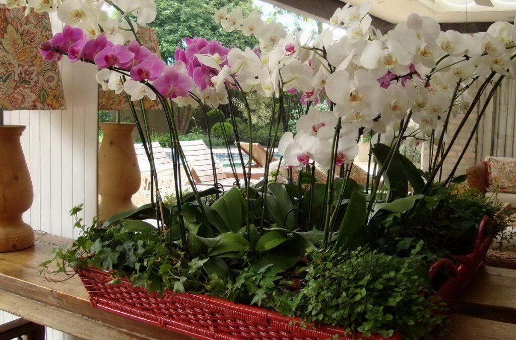 Dia das mães:  presenteando com Orquídea , flores para uma flor