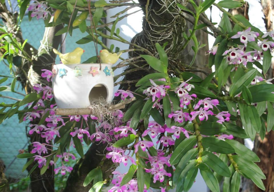 Vasos e casinhas para passarinhos de cerâmica são um charme no jardim
