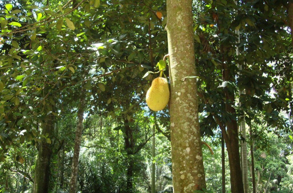 Parque Lage é um passeio pela mata tropical carioca