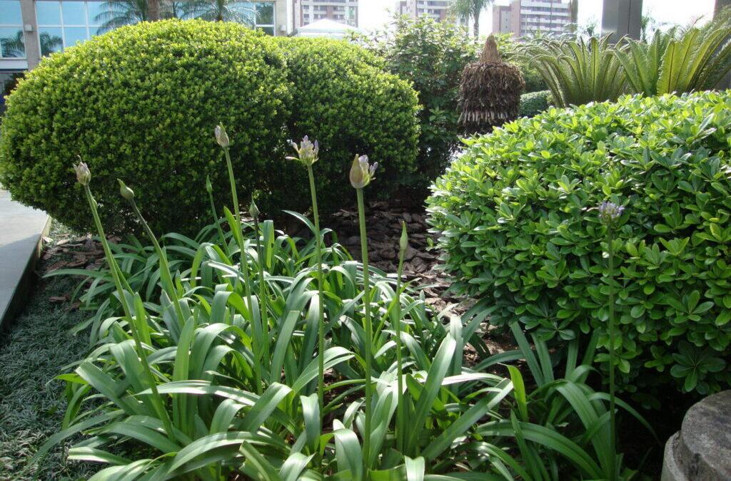 Renove o jardim com flores para as festas de fim de ano
