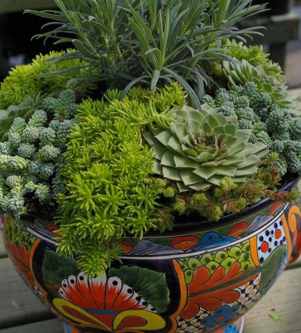 Suculentas em vasos se adaptam a qualquer espaço