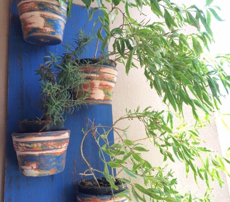 O que fazer quando suas plantas estão com pragas: cochonilhas