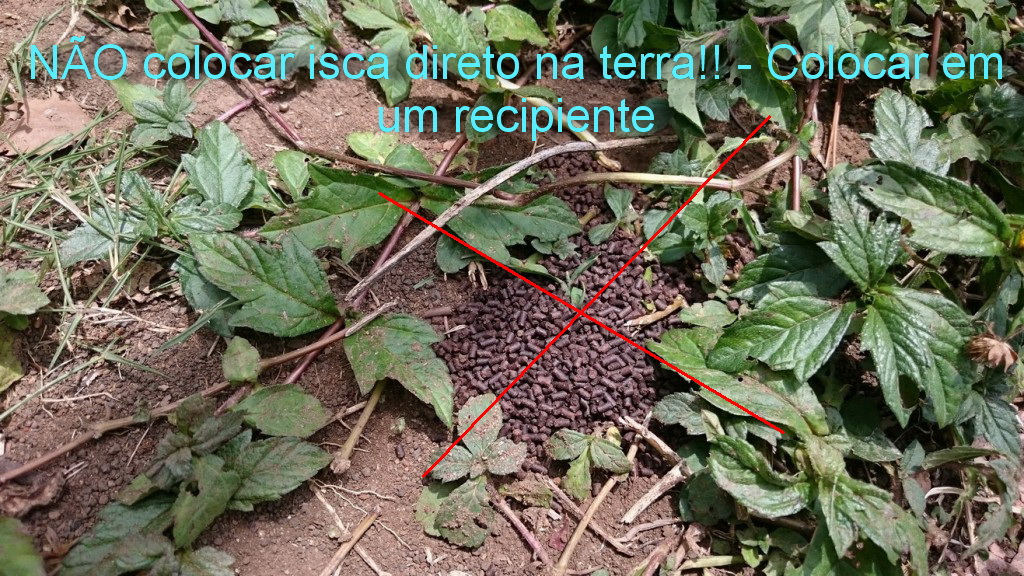 Não colocar a isca tóxica na terra direto, contamina!! usar um recipiente com a isca granulada