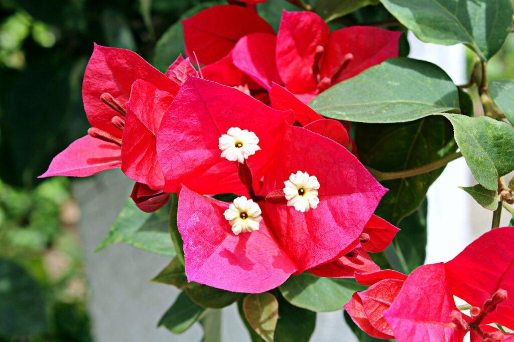 Flor branca e folhas coloridas vermelhas