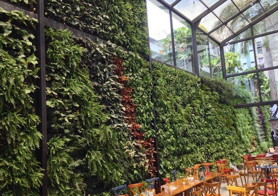"""Já ouviu falar de """"cortinas verdes"""" com vegetação?"""