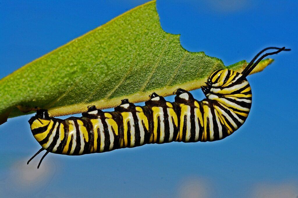 caterpillar-562104_1280