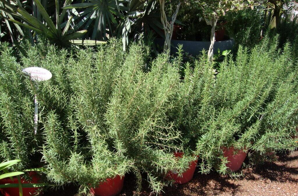 Cultive saúde no jardim com plantas medicinais e temperos
