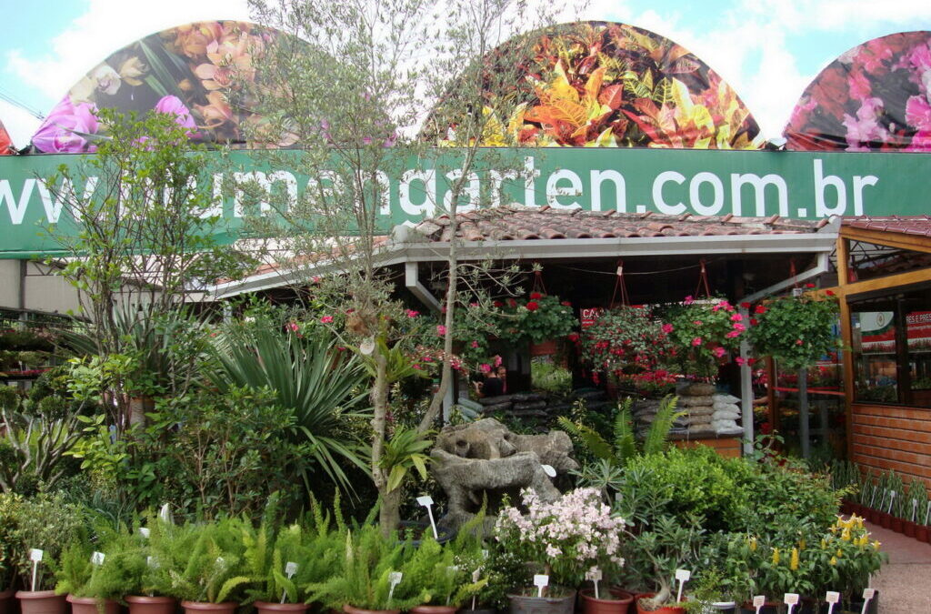 Conviver com as plantas melhora a qualidade de vida