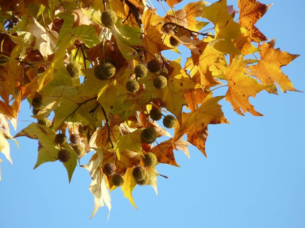 leaves-10698_1280