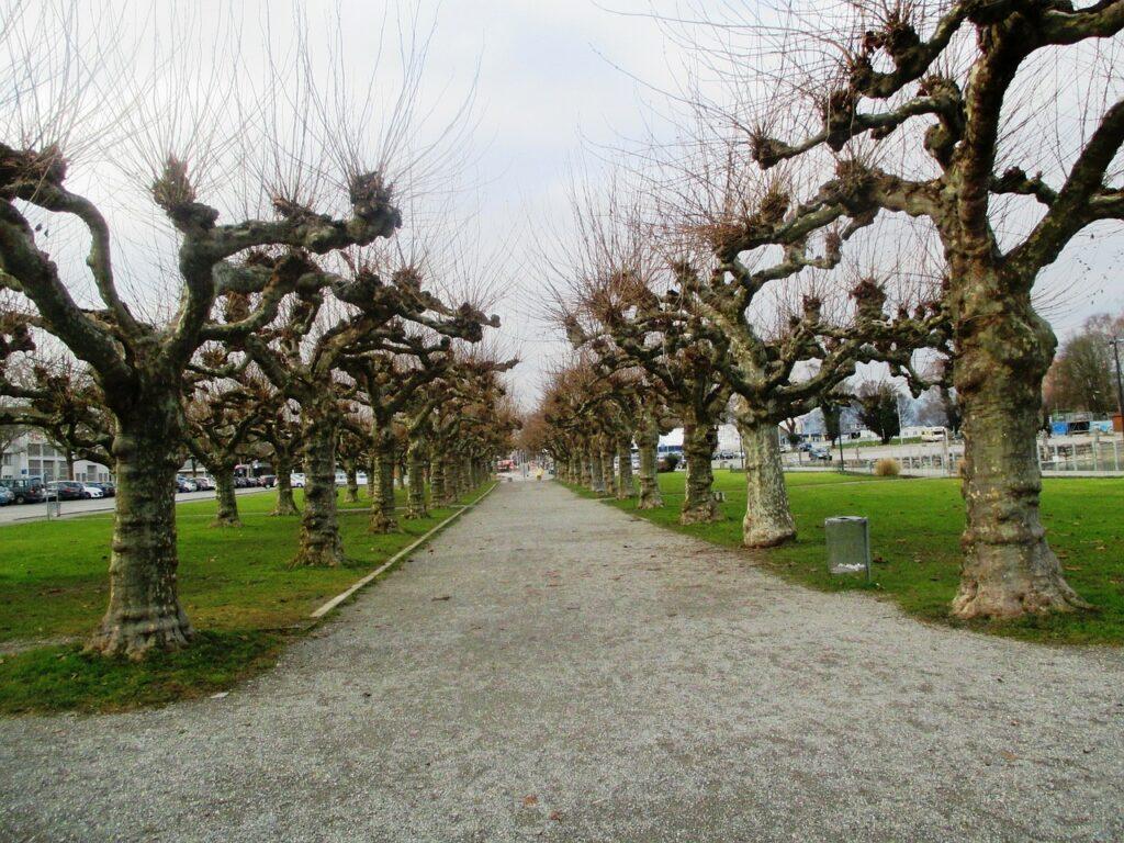 trees-250340_1280