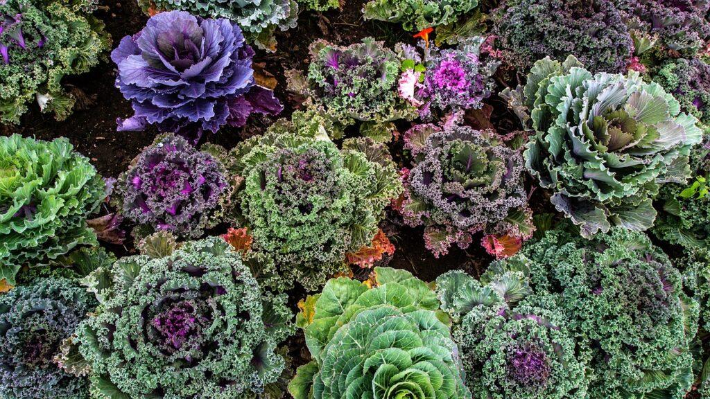 Quer aprender a plantar hortaliças e temperos em casa?