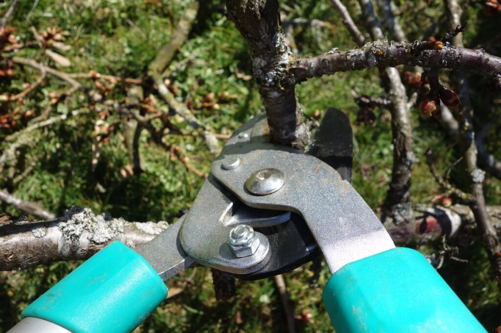 pruning-shears-535350_1280