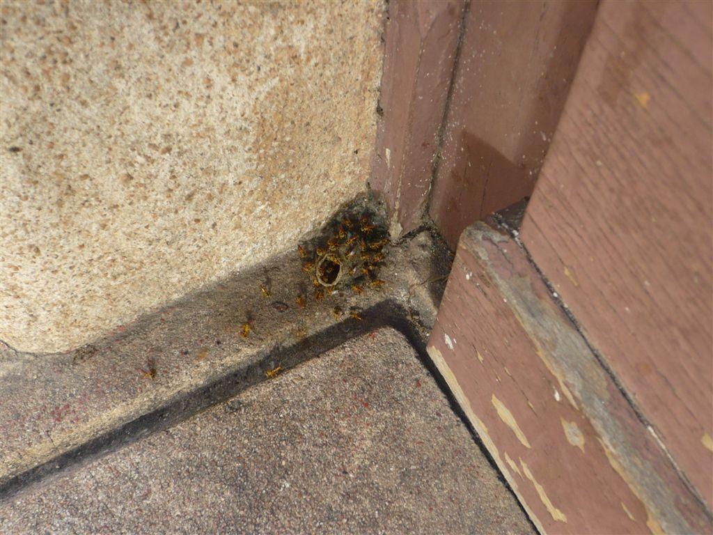 Animais de estimação no jardim: abelhas - Foto: Lilly Lutzenberger