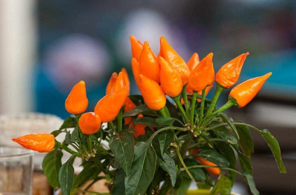 Dicas de presentes para o Dia das Mães: Plantas e acessórios de jardim