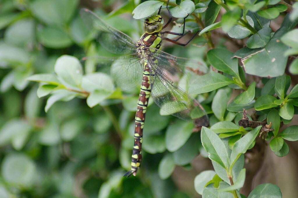 dragonfly-178309_1280