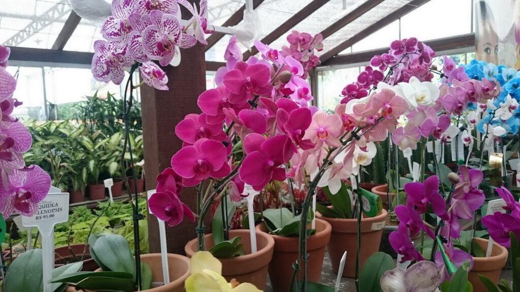 Orquídeas e bromélias cultivadas em muro com jardim vertical