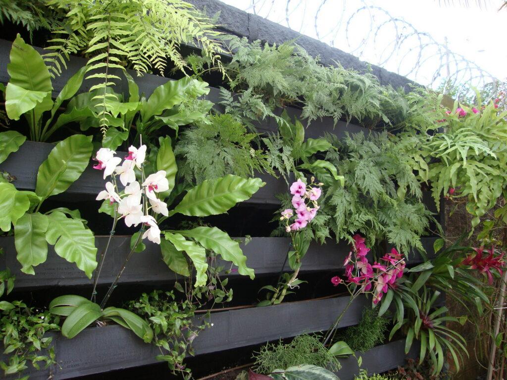 Plantio de orquídeas, asplenios no Jardim vertical em execução