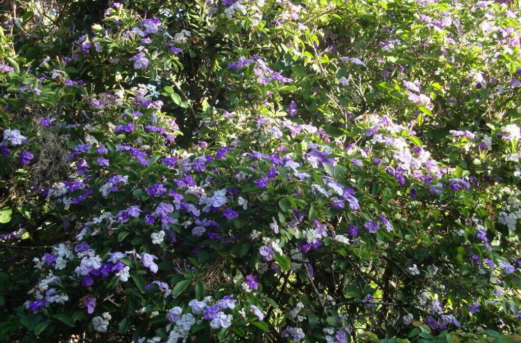 Dicas de árvores com flores e perfumadas para plantar