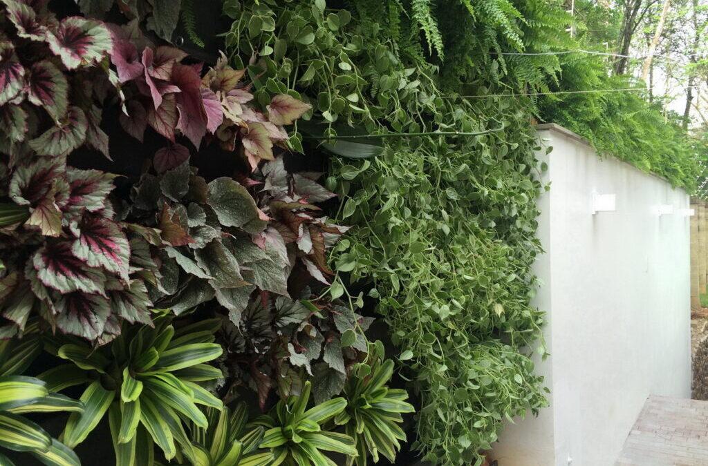 Paredes sem graça? Muros feios? Faça um jardim vertical!