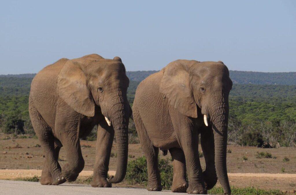 Parques nacionais têm turismo selvagem e ético na África do Sul