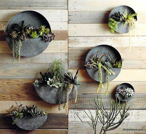 Plantas suculentas cabem em qualquer espaço!