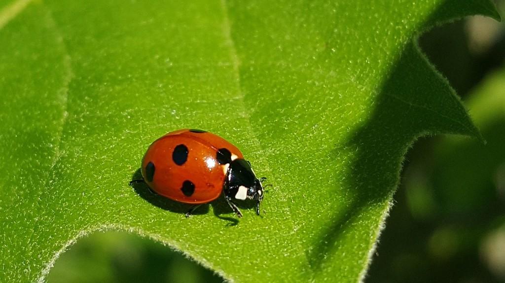 Conheça insetos benéficos para o jardim e a horta