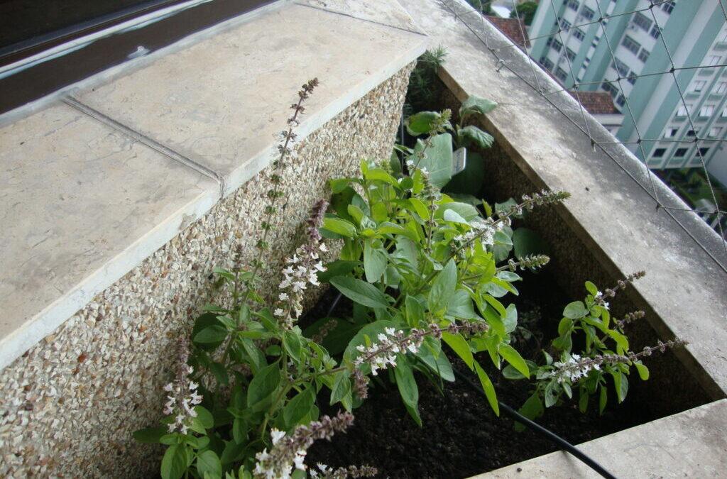 Veja como cultivar sua salada em horta criada no apartamento