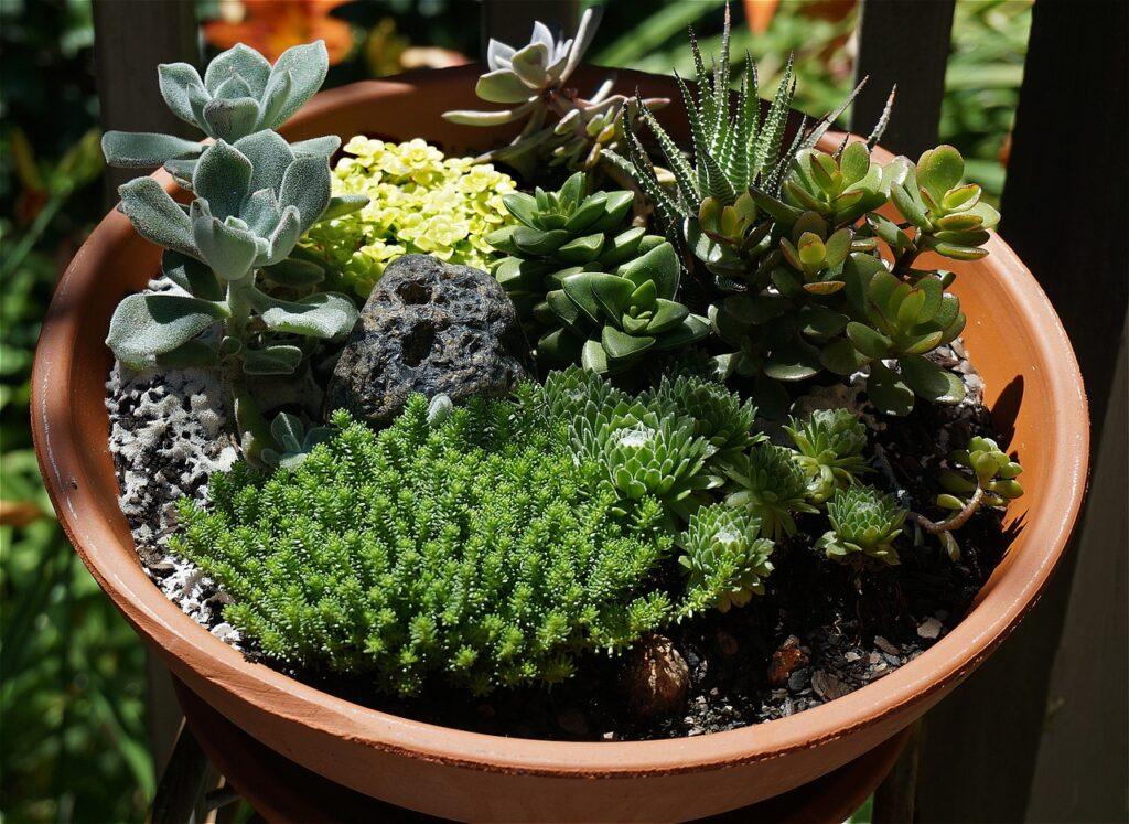 succulent-garden-1444240_1280