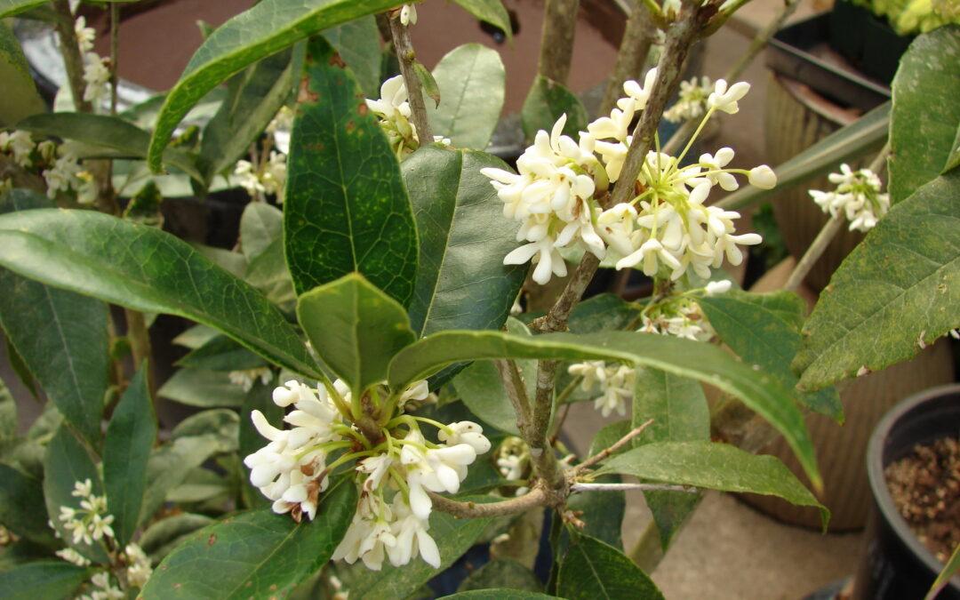 Conheça  5 plantas perfumadas para ter no jardim ou em vasos