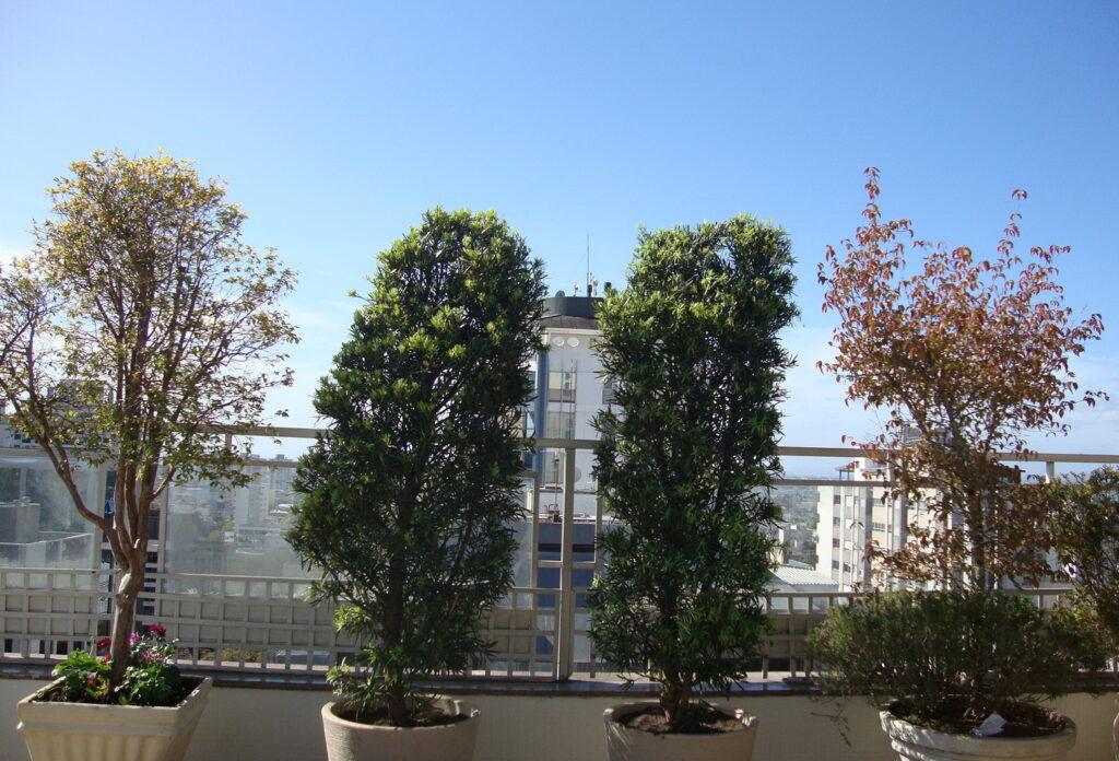 jardim na cobertura 3