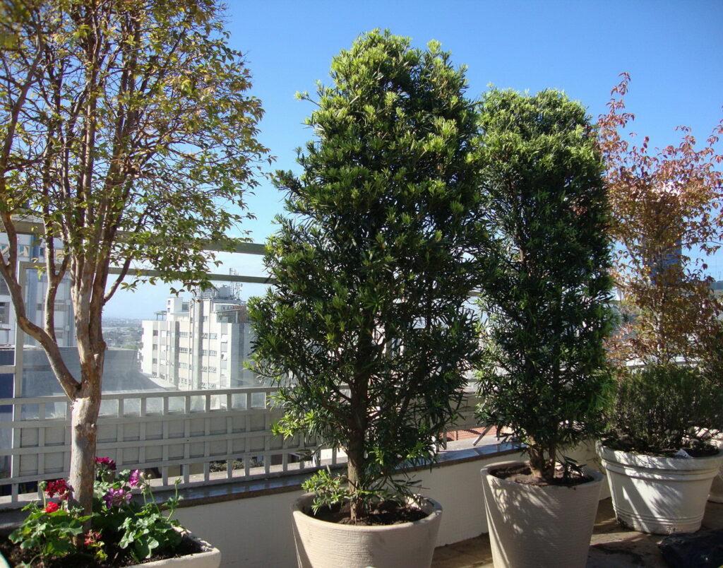 jardim na cobertura 4