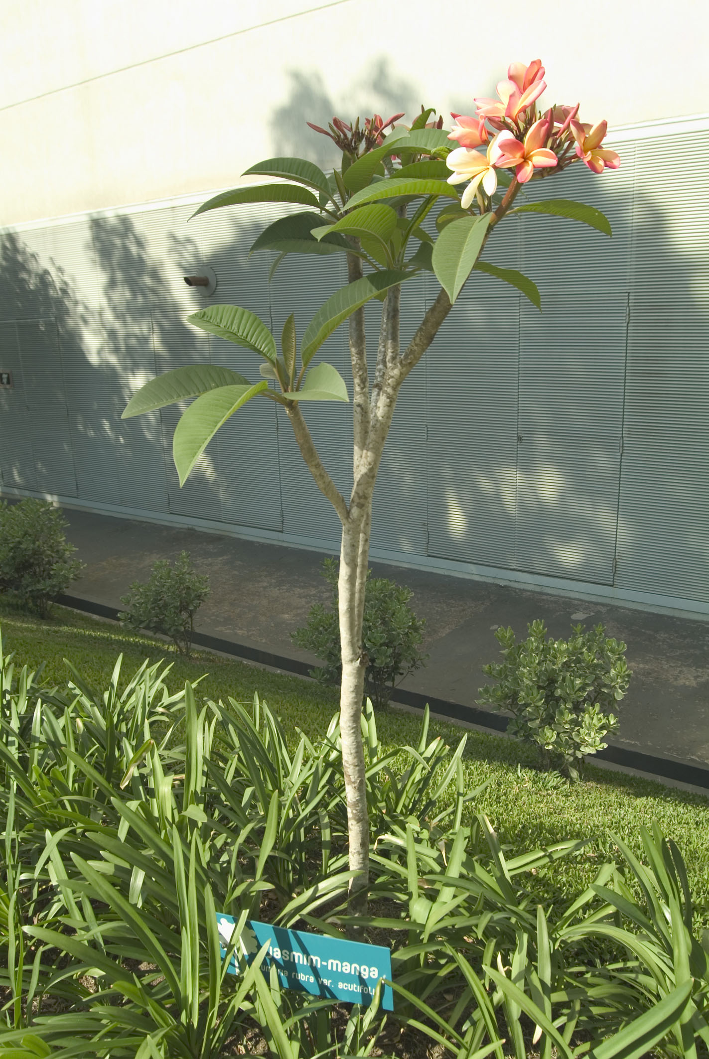 Árvores com placas identificação foto: Eneida Serrano