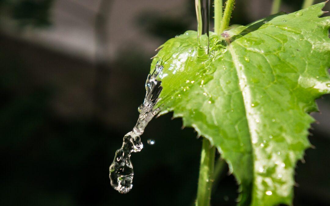 Qual a frequência e a quantidade de água que as plantas precisam?