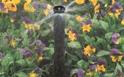 Água no jardim: saiba o que é tendência em irrigação para baixo consumo de água