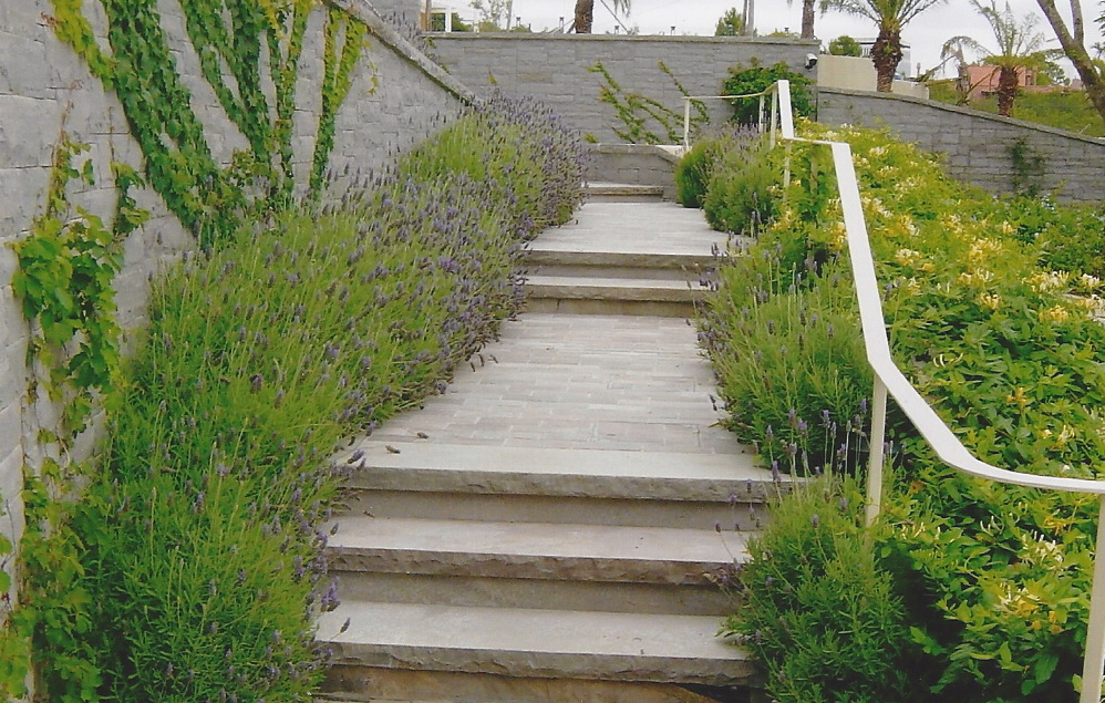staircase with lavender