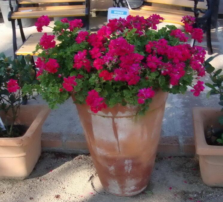 Jardim na praia: conheça plantas floridas adaptadas ao litoral