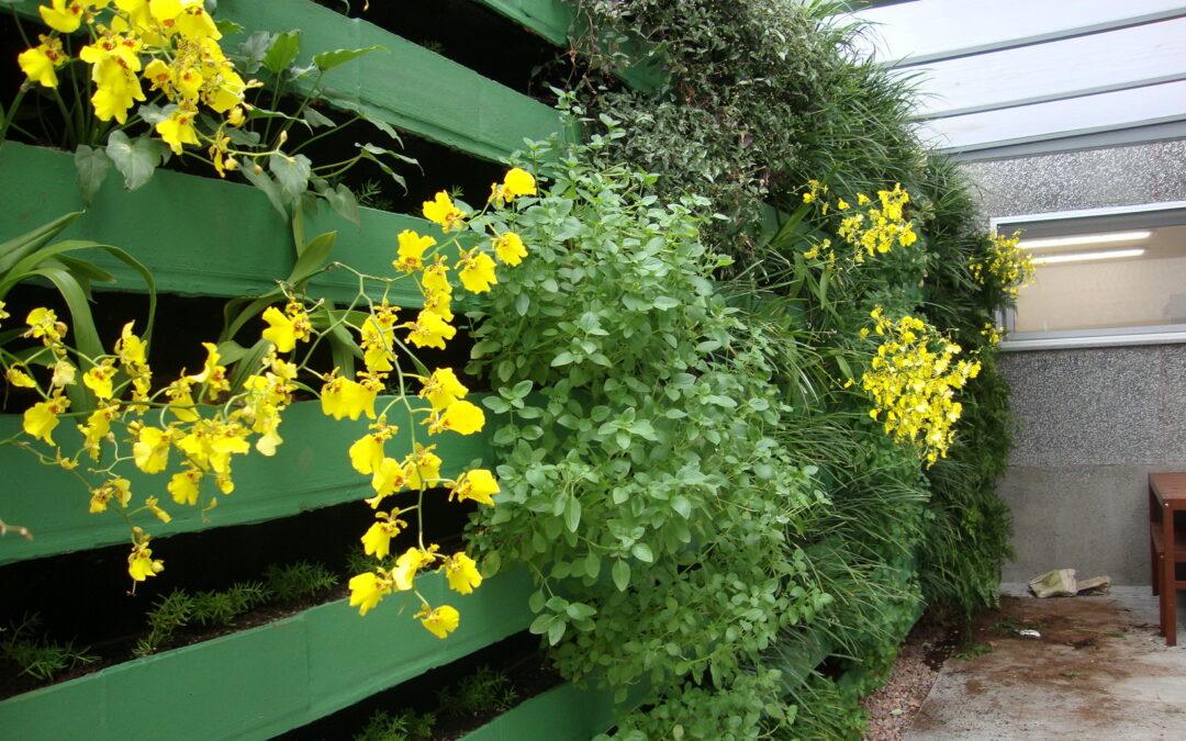 Plantas transformam muro em jardim vertical na Renner