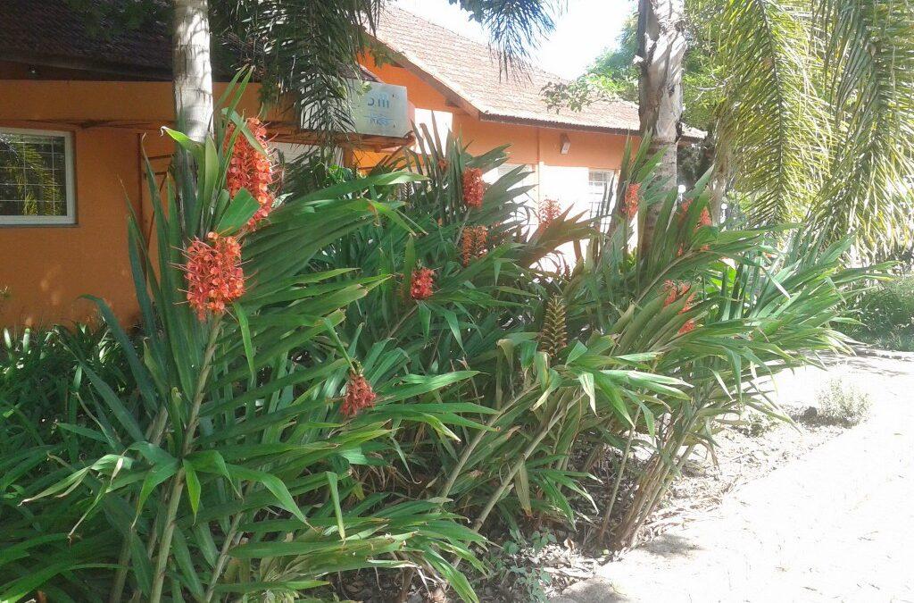 Flor exótica atrai beija-flores  para o jardim
