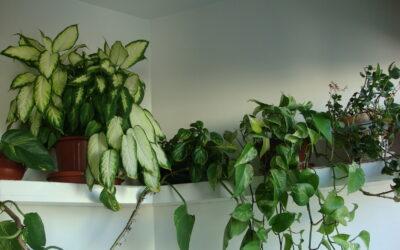 A churrasqueira que virou um jardim no apartamento