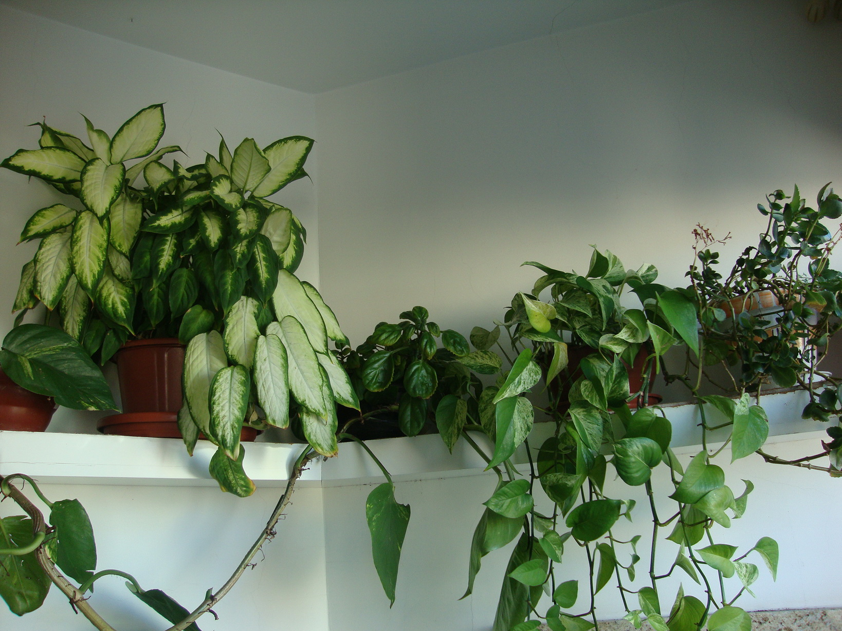 muitas plantas